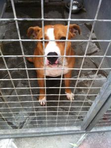 animals needing homes new hope animal rescue 3.12