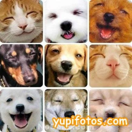 Image result for images of happy animals
