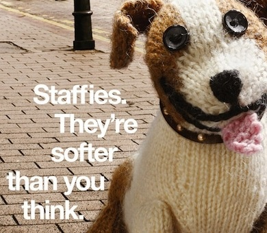 staffies they're softer than you think