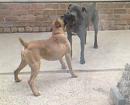 lennox and kennel mate juicy playing